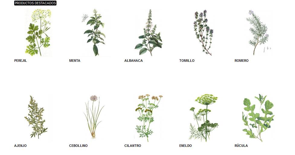 Agosto 2012 descubrimientos - Plantar plantas aromaticas ...